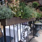 Currant Railing and Planter