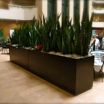 Large Steel Planter Boxes, Embassy Suites 1