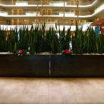 Large Steel Planter Boxes for Embassy Suites 2